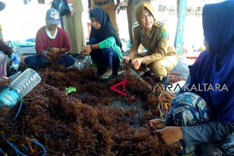 Bupati Nunukan blusukan tindaklanjuti informasi warga di Perkampungan Budidaya Rumput Laut Mamolo