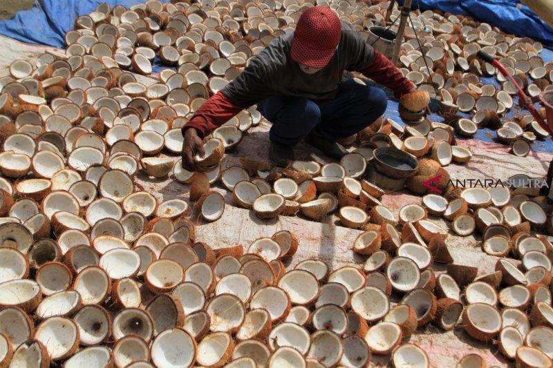 Karantina Pertanian Manado memfasilitasi ekspor kopra Tahuna ke India