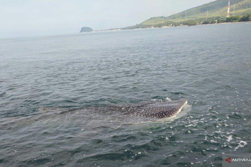 Sekumpulan hiu ditemukan di pesisir Pantai Peninsula