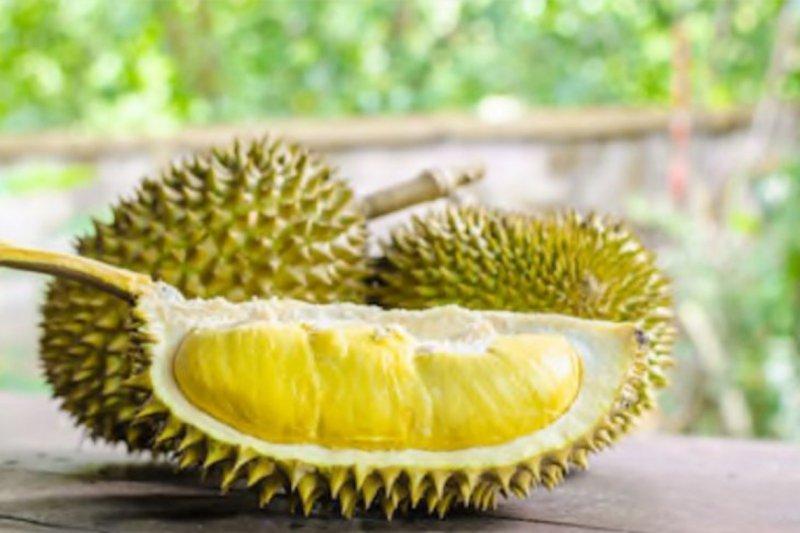 Durian mengandung kolestrol ternyata hanya mitos