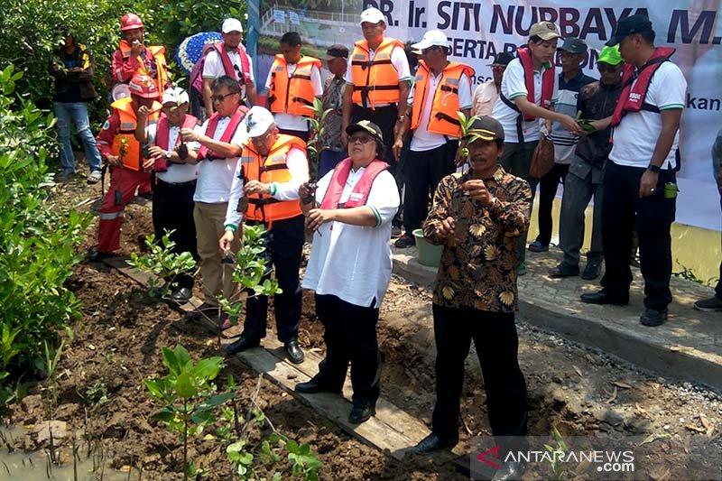 Menteri LHK puji kawasan magrove di Segara Anakan (Video)