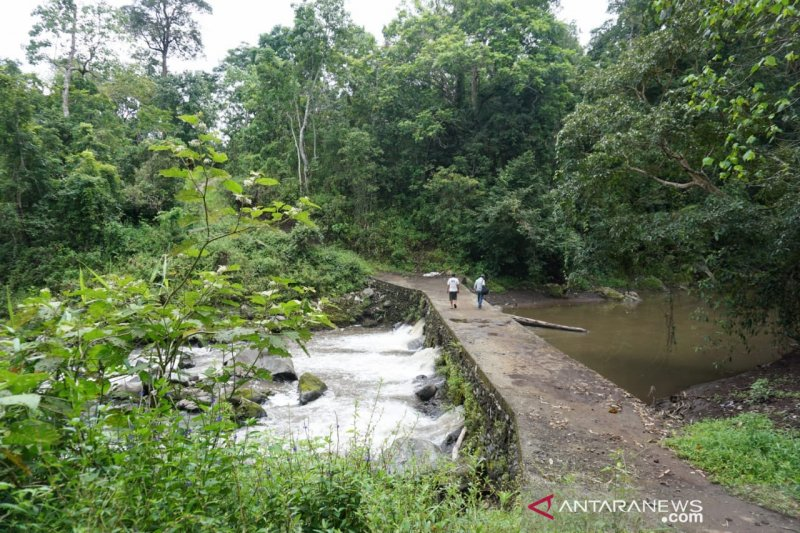 Belajar antigolput dari warga Selagolong kaki Gunung Rinjani