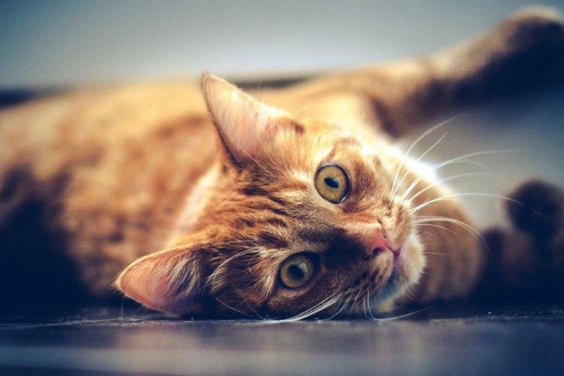 Kucing ternyata mengenali namanya tapi cuek saat dipanggil