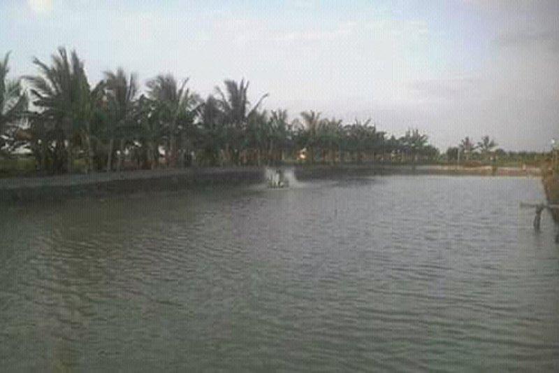Harga udang vaname di  Lampung Timur Rp40 ribu perkilogram