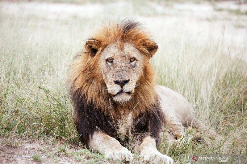 Konferensi CITES didesak larang perlombaan berburu