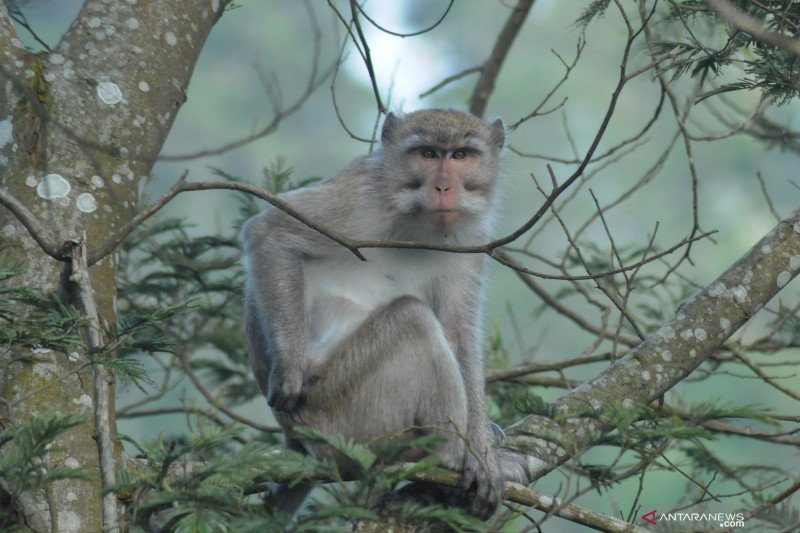 Bocah di Bogor lemas digigit monyet