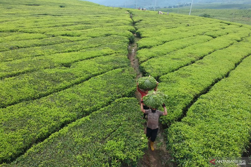 Ministry readies strategies to intensify plantation exports
