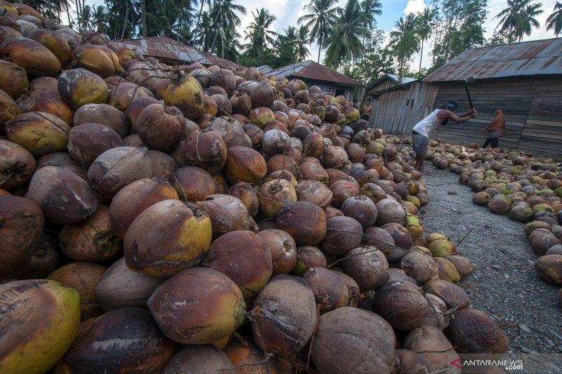 Apeksu : Terbukanya Jalur Bitung-Davao  untungkan petani