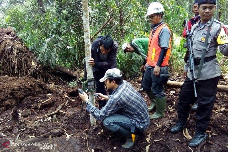 BBKSDA Riau pasang kamera jebak pelintasan harimau sumatera