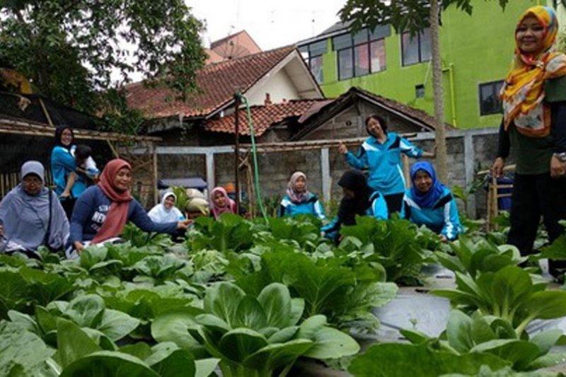 Pertanian perkotaan terpadu perkuat agribisnis Kota Magelang (1)