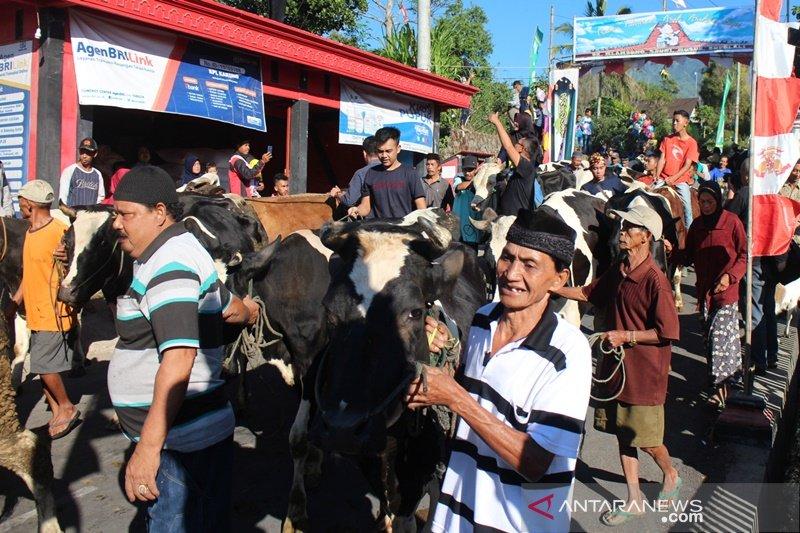 Ratusan ekor sapi diarak ikuti tradisi Syawalani