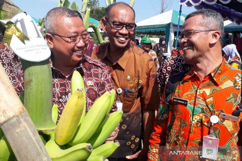 Bantul mempromosikan keragaman buah pisang