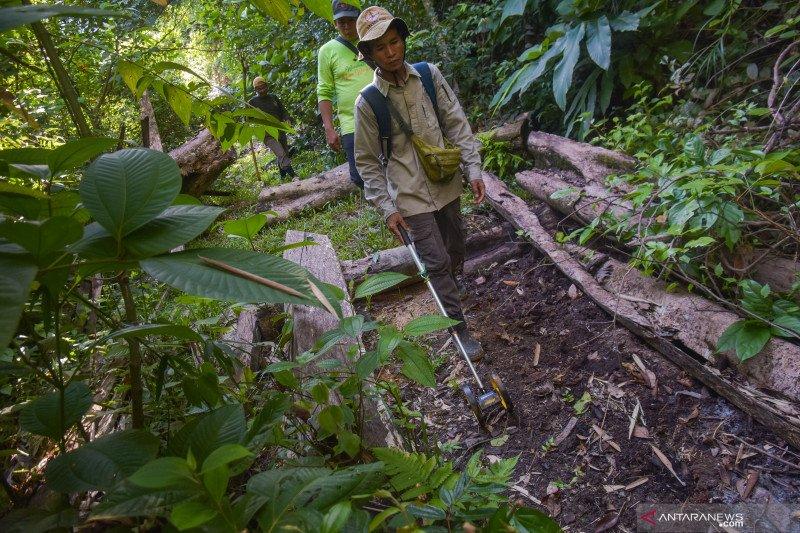 Polda Riau minta BBKSDA proaktif jaga hutan lindung dari pembalakan liar