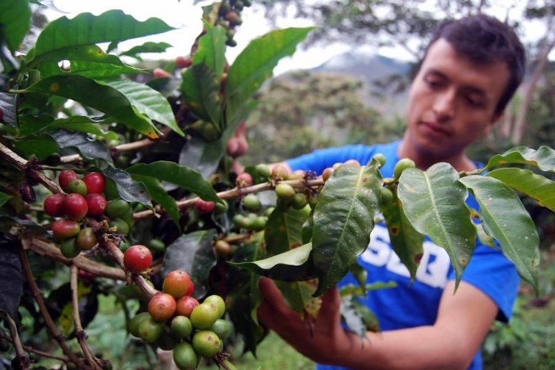 Cari alternatif di tengah krisis, petani kopi dunia akan  bertemu di Brazil