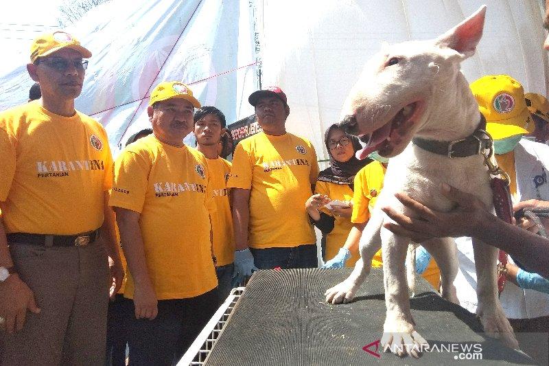Kementan bagikan dua ribu vaksin rabies gratis di Garut