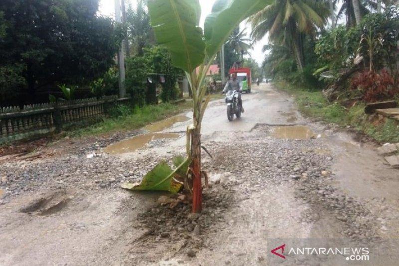 Di Dharmasraya, warga tanam pohon pisang di tengah jalan