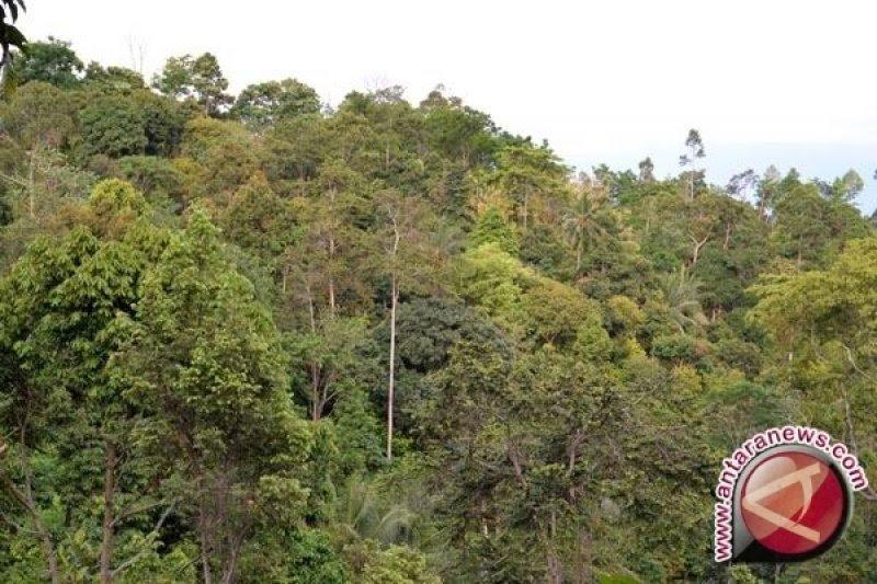 Kementerian LHK menjadikan pengelolaan hutan di DIY sebagai referensi
