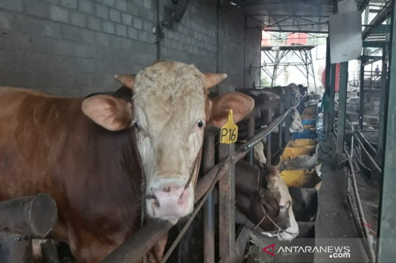 Jelang Idul Adha,Pemkab Pekalongan intensifkan pemeriksaan kesehatan hewan ternak