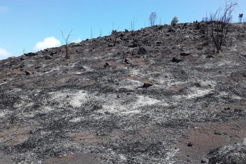 Masyarakat padamkan kobaran api di Gunung Botak Raja Ampat