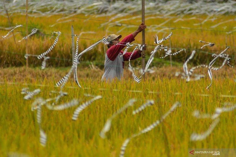 Guru Besar Unsoed ingatkan pentingnya regenerasi SDM pertanian