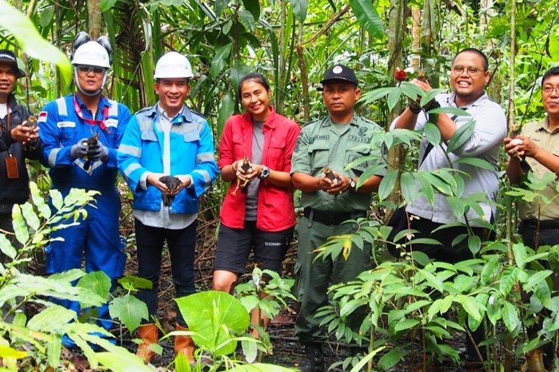 13 anak maleo hasil tangkaran PT.DSLNG dilepas ke habitatnya