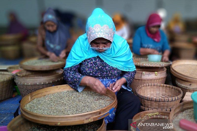PTPN IX terus tingkatkan produksi kopi kering