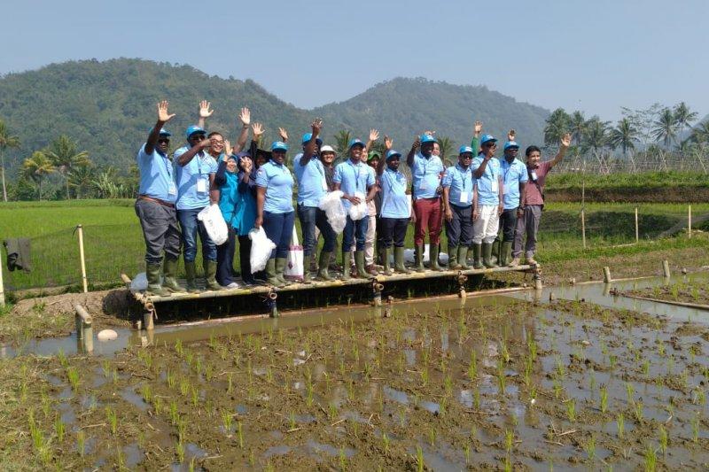 Perwakilan  lima negara Afrika belajar minapadi Indonesia