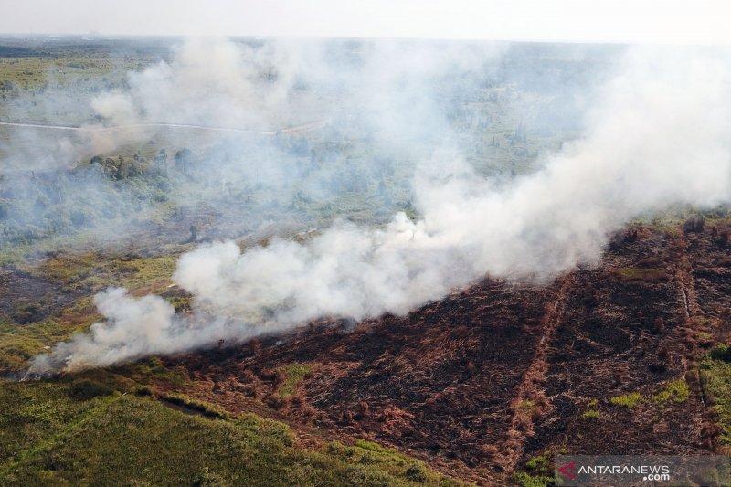 Pemprov beri peringatan 103 perusahaan pembakar lahan