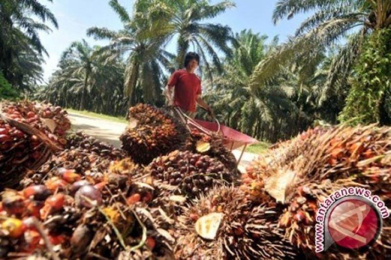 Produsen minyak sawit resah karena ketidakpastian pasar minyak nabati dunia