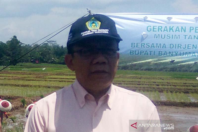 500 hektare tanaman padi di Banyumas puso akibat kekeringan