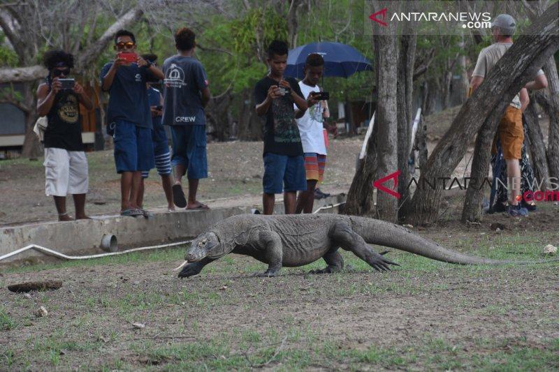 Artikel - Daya tarik Komodo dan fenomena penutupan Pulau Komodo