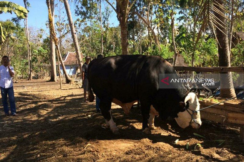 Warga Mulusan Gunung Kidul mendapat hewan kurban Presiden Jokowi