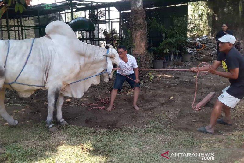 Daging kurban di Istana Gedung Agung disalurkan untuk pegawai dan warga