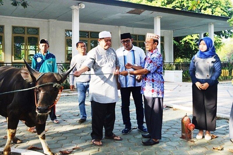 Pemkab Kapuas bagikan delapan ekor sapi kurban