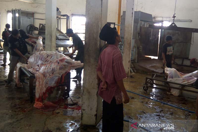 Cacing hati ditemukan pada hewan kurban di RPH Purwokerto