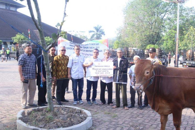 Bukit Asam tebar 75  sapi kurban untuk 28 desa
