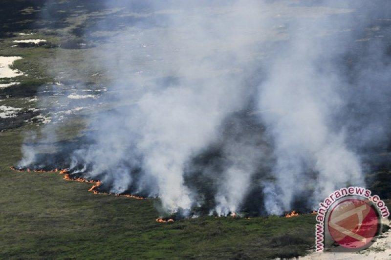 Sumsel proyeksi lahan bekas terbakar di  OKI jadi lokasi PLTS