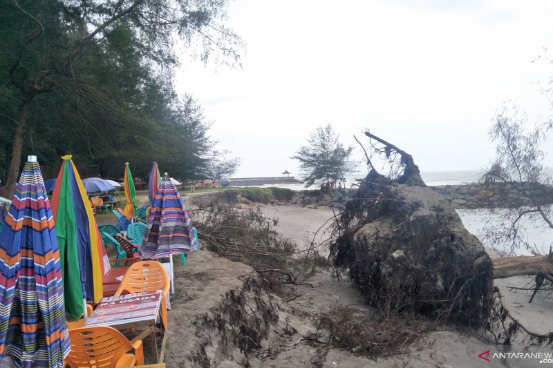 Gelombang tinggi kikis bibir Pantai Kata Pariaman, tumbangkan pohon cemara dan merusak jalan