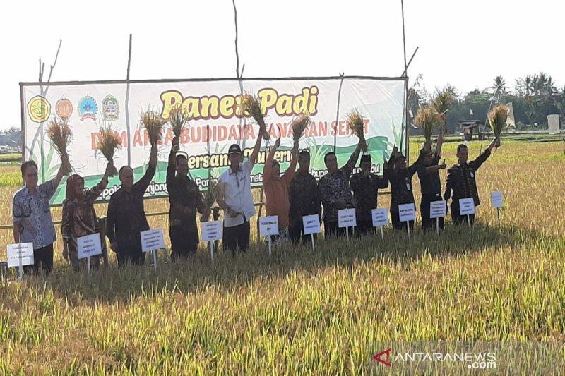 Sultan mengapresiasi petani yang berhasil menanam padi teknik BTS