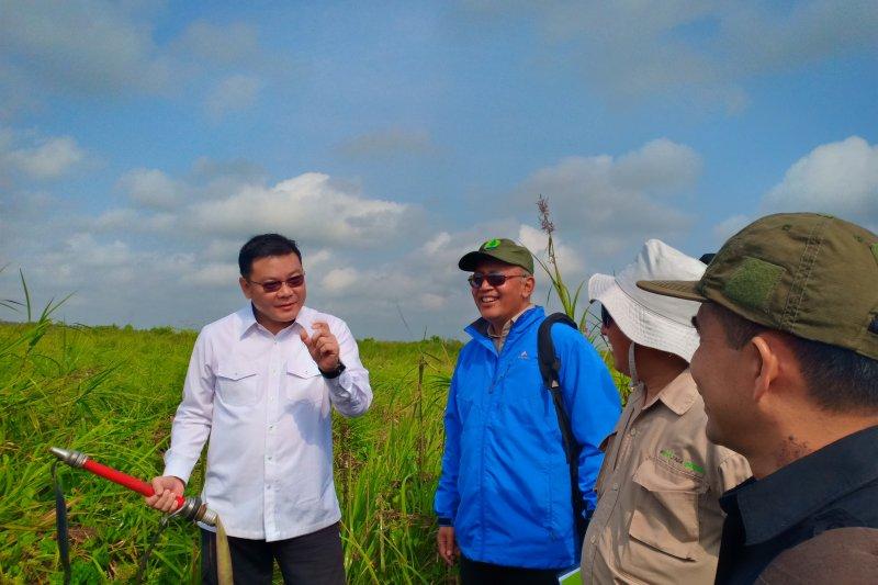 Kepala BRG tinjau realisasi pemulihan hutan SM Padang Sugihan