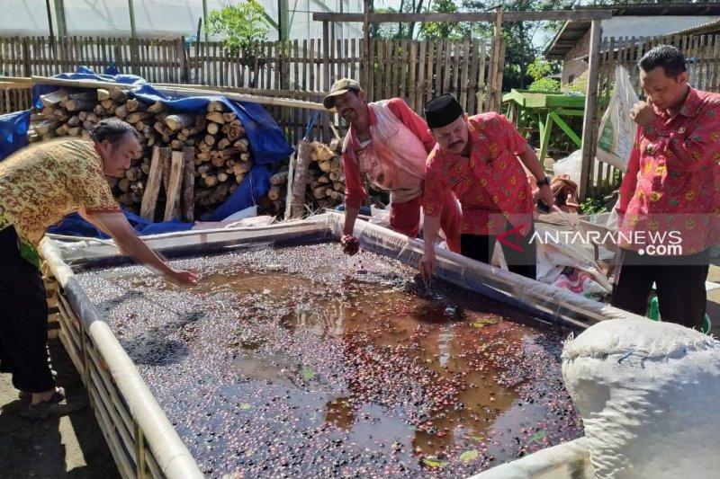Kopi  Vietnam diduga pengaruhi turunnya harga jual kopi petani