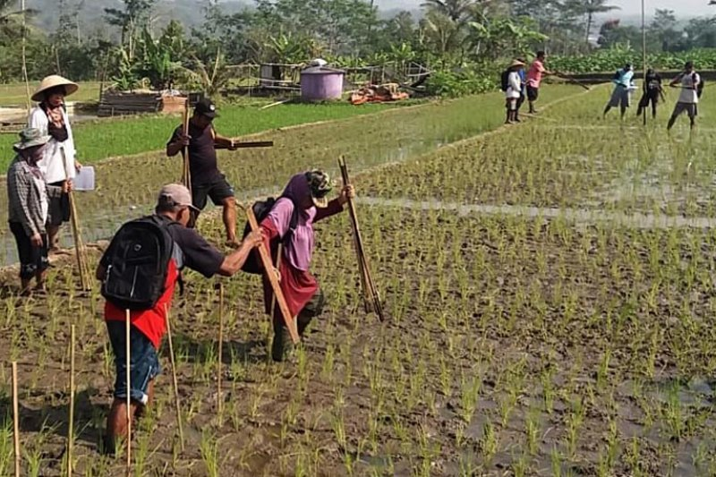 Pemkot Magelang kenalkan agroekosistem sawah kepada petani