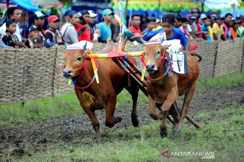 Pemkab Bangkalan alokasikan Rp1,6 miliar untuk lapangan karapan sapi