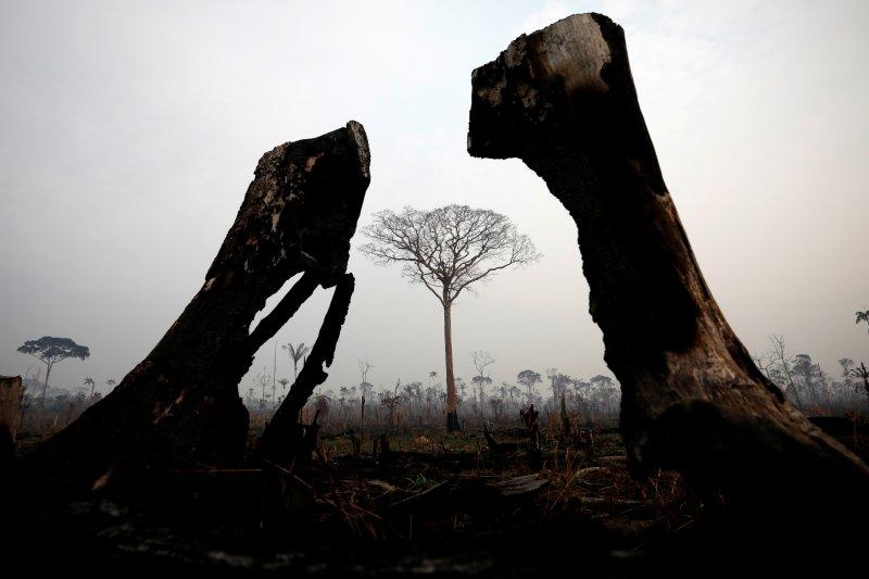 Paus Fransiskus serukan komitmen global atasi kebakaran Amazon