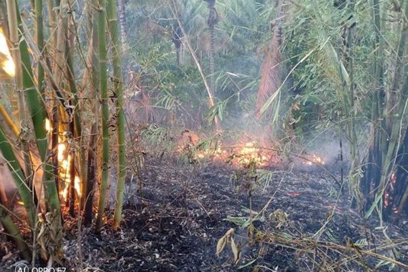 BPBD: Api hanguskan 5,5 hektare lahan di Desa Sawangan-Minahasa