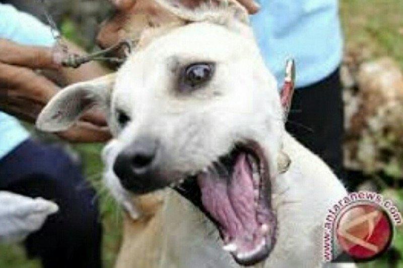 Delapan orang digigit, sejumlah anjing liar di Dompu dimusnahkan