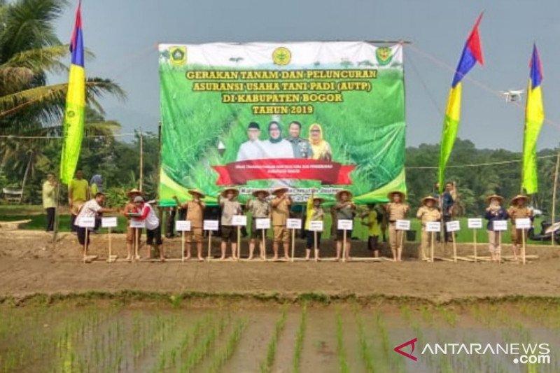 Distan Bogor luncurkan Asuransi Usaha Tani Padi di tengah musim kemarau