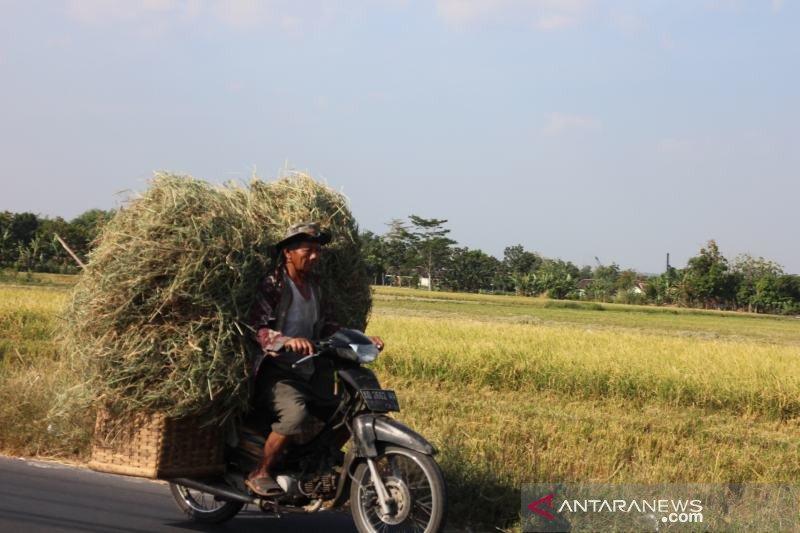 1.392 hektare lahan tanaman padi di Boyolali kekeringan
