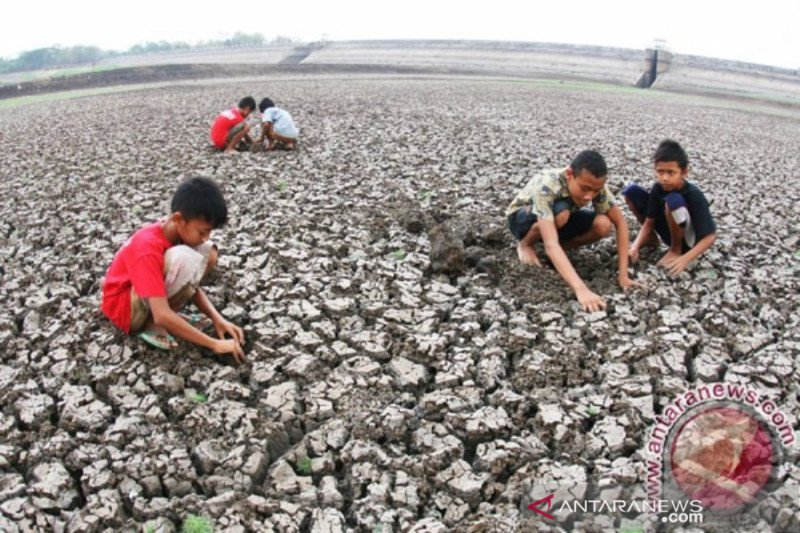 Pemerintah Provinsi NTT siapkan benih bantu petani gagal panen