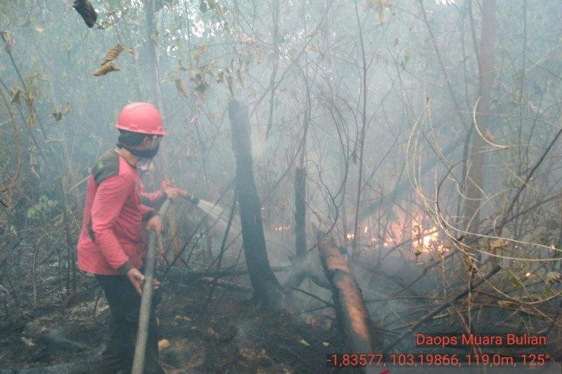 Sedikitnya 70 ha kawasan Tahura Jambi terbakar